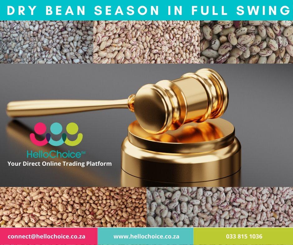 Hello Dry Bean Season!
