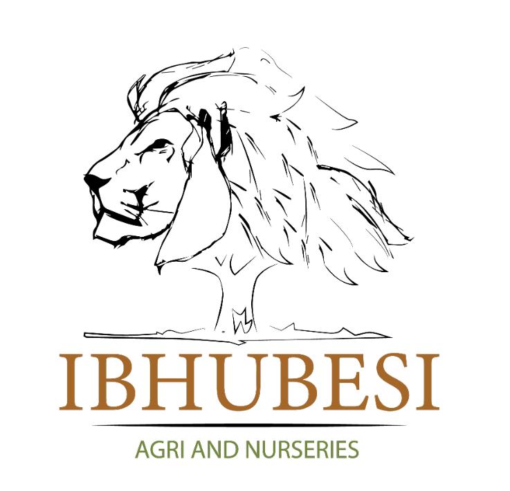 Ibhubesi Logo