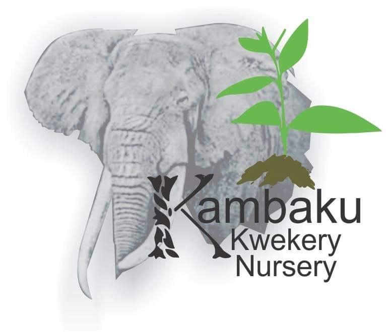 Kambaku Kwekery Nursery