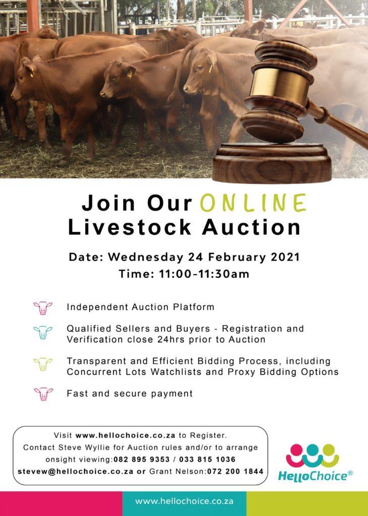 HelloChoice Livestock Auction – 24 February 2021