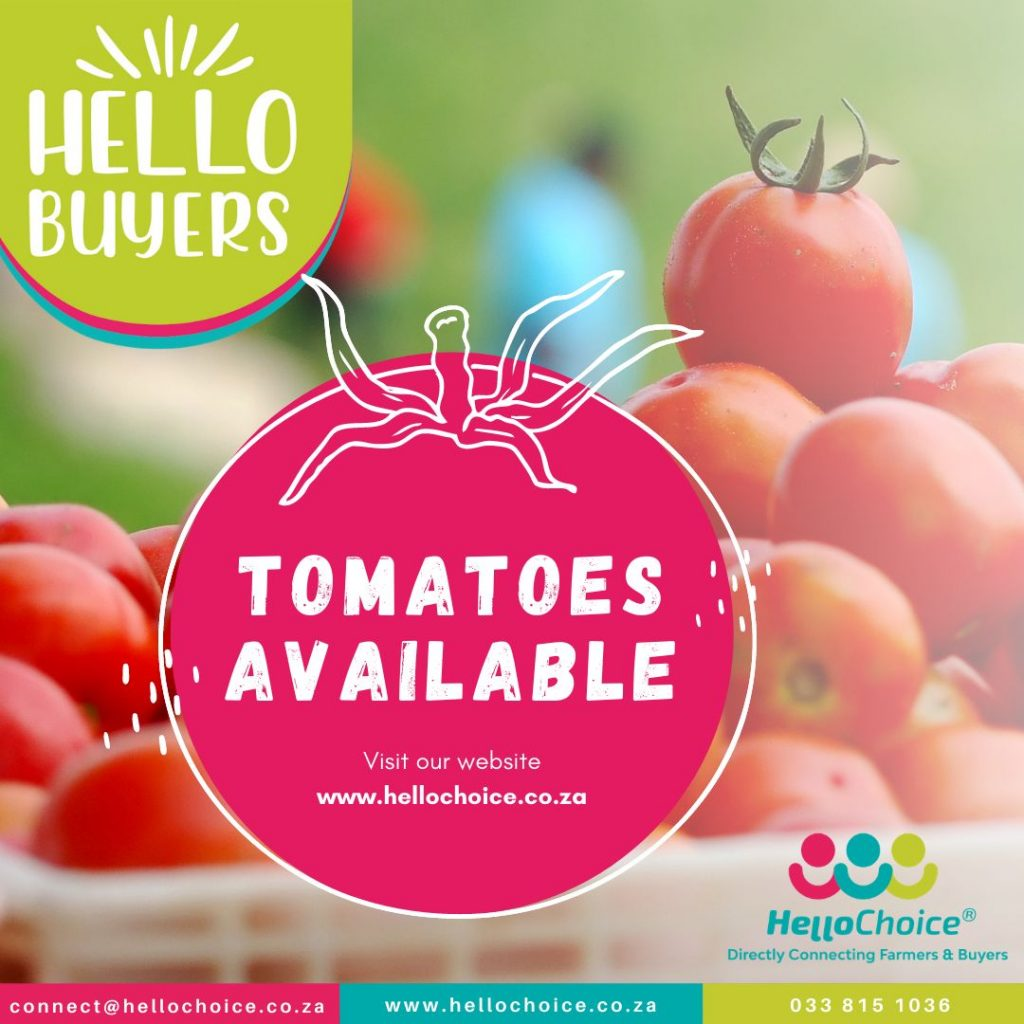 Tomatoes Available