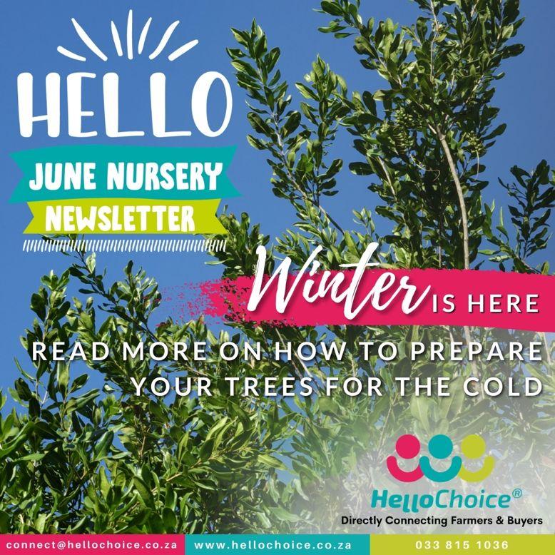 HelloChoice Nursery Newsletter 4